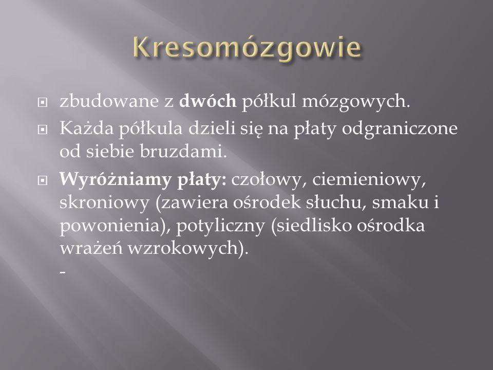 Kresomózgowie zbudowane z dwóch półkul mózgowych.