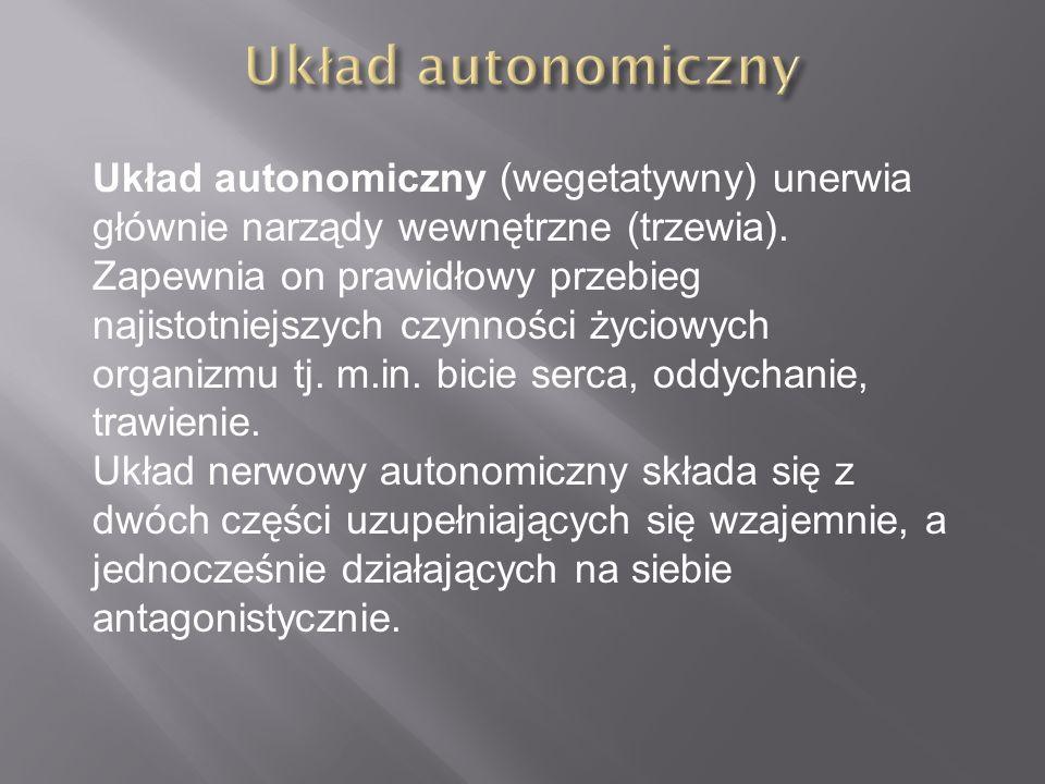 Układ autonomiczny