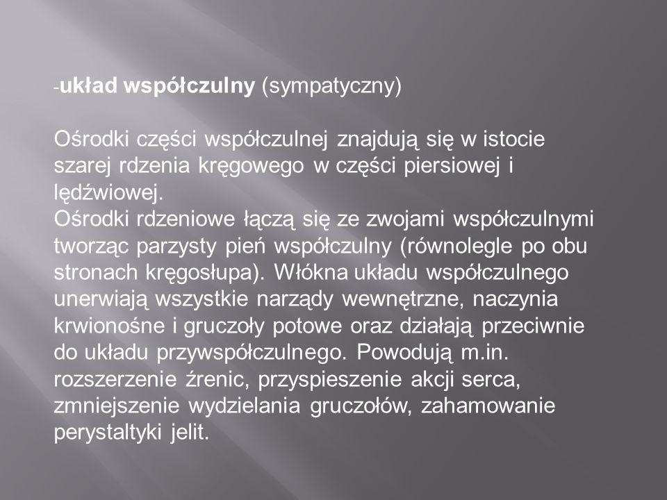 -układ współczulny (sympatyczny)