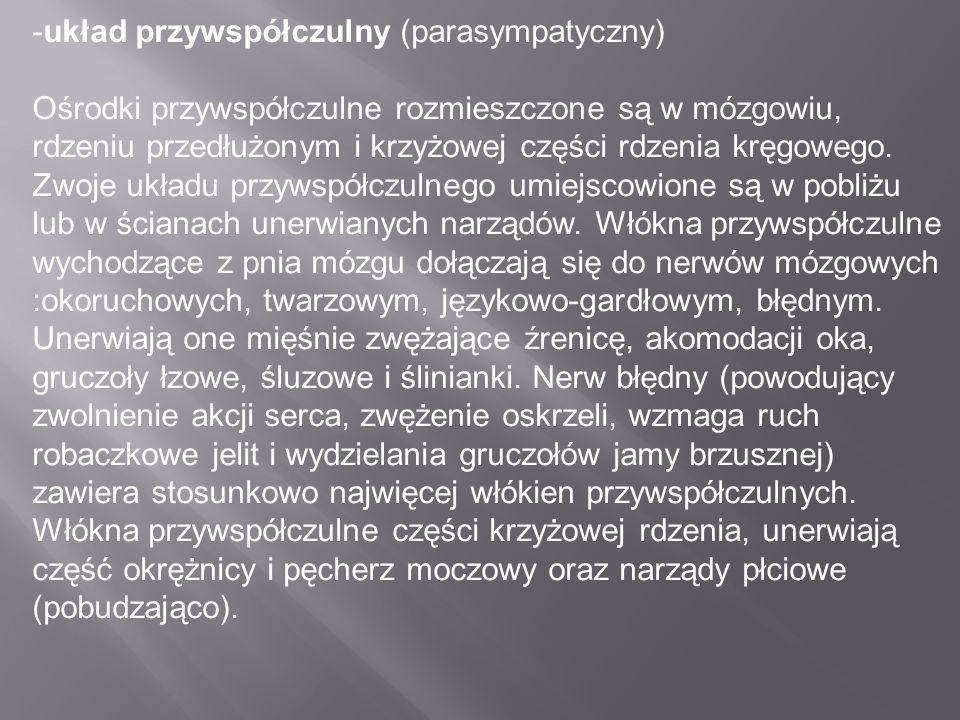 -układ przywspółczulny (parasympatyczny)