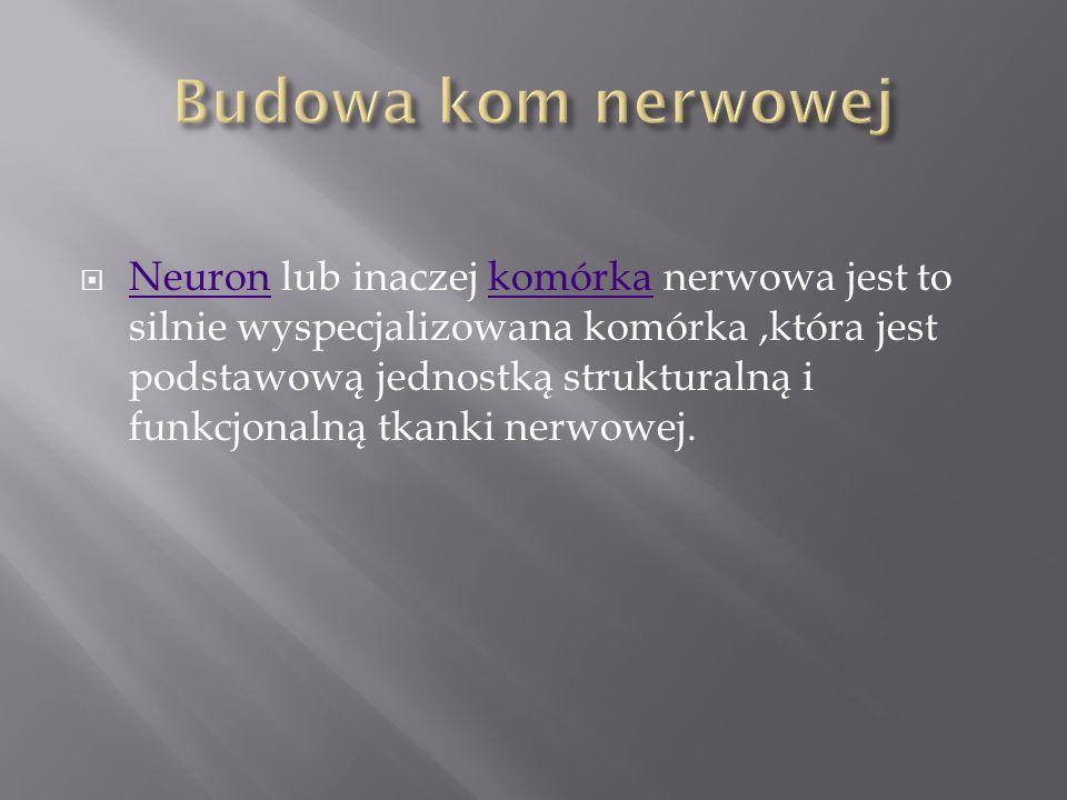 Budowa kom nerwowej