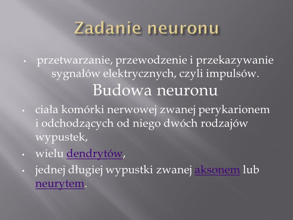 Zadanie neuronu przetwarzanie, przewodzenie i przekazywanie sygnałów elektrycznych, czyli impulsów. Budowa neuronu.