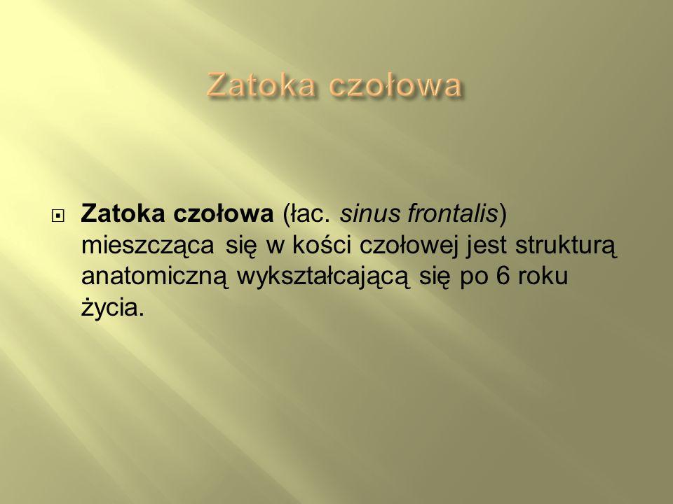 Zatoka czołowaZatoka czołowa (łac.