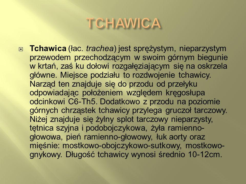 TCHAWICA