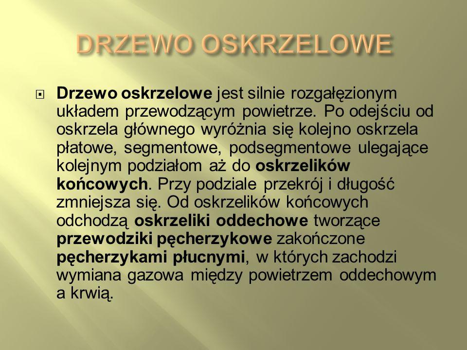 DRZEWO OSKRZELOWE