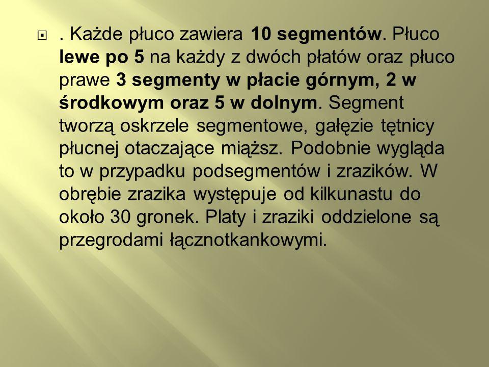 Każde płuco zawiera 10 segmentów