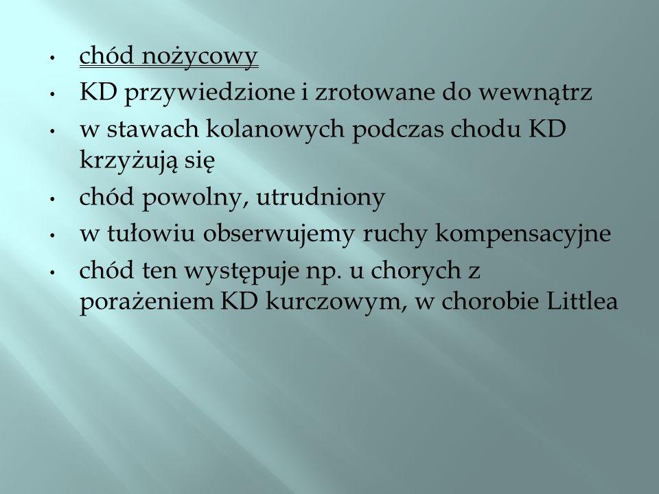 chód nożycowy KD przywiedzione i zrotowane do wewnątrz. w stawach kolanowych podczas chodu KD krzyżują się.