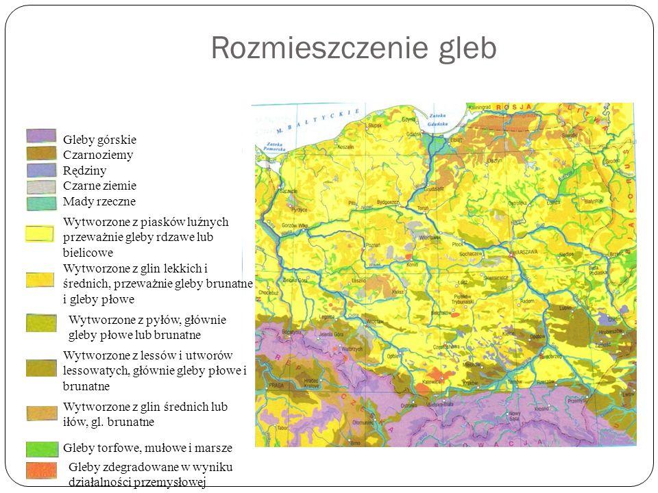 Rozmieszczenie gleb Gleby górskie Czarnoziemy Rędziny Czarne ziemie