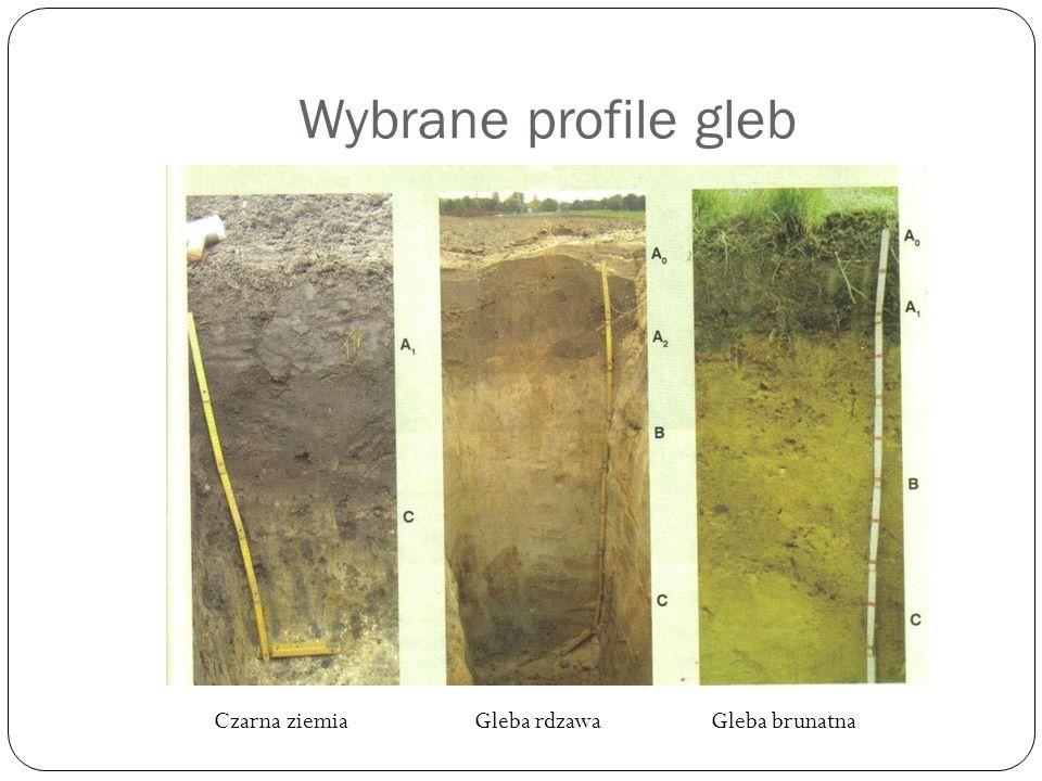 Wybrane profile gleb Czarna ziemia Gleba rdzawa Gleba brunatna