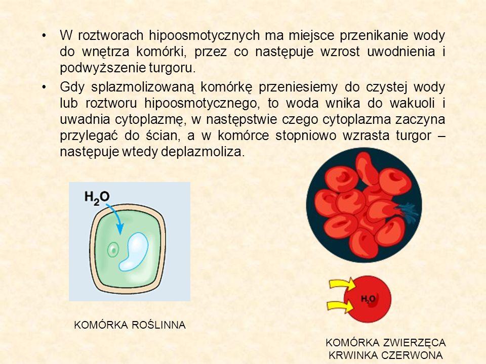W roztworach hipoosmotycznych ma miejsce przenikanie wody do wnętrza komórki, przez co następuje wzrost uwodnienia i podwyższenie turgoru.