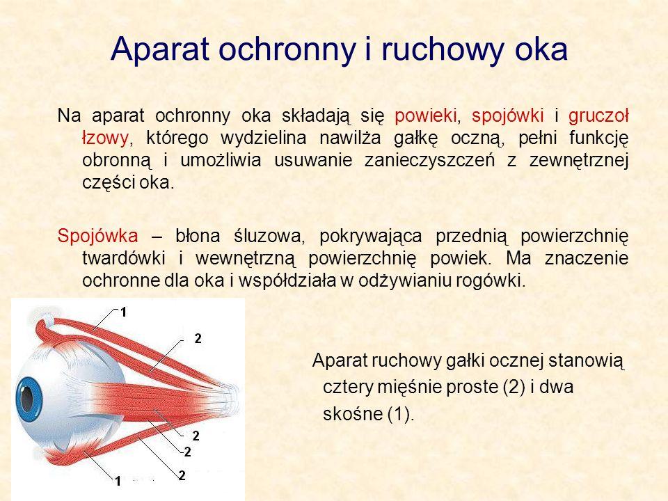 Aparat ochronny i ruchowy oka