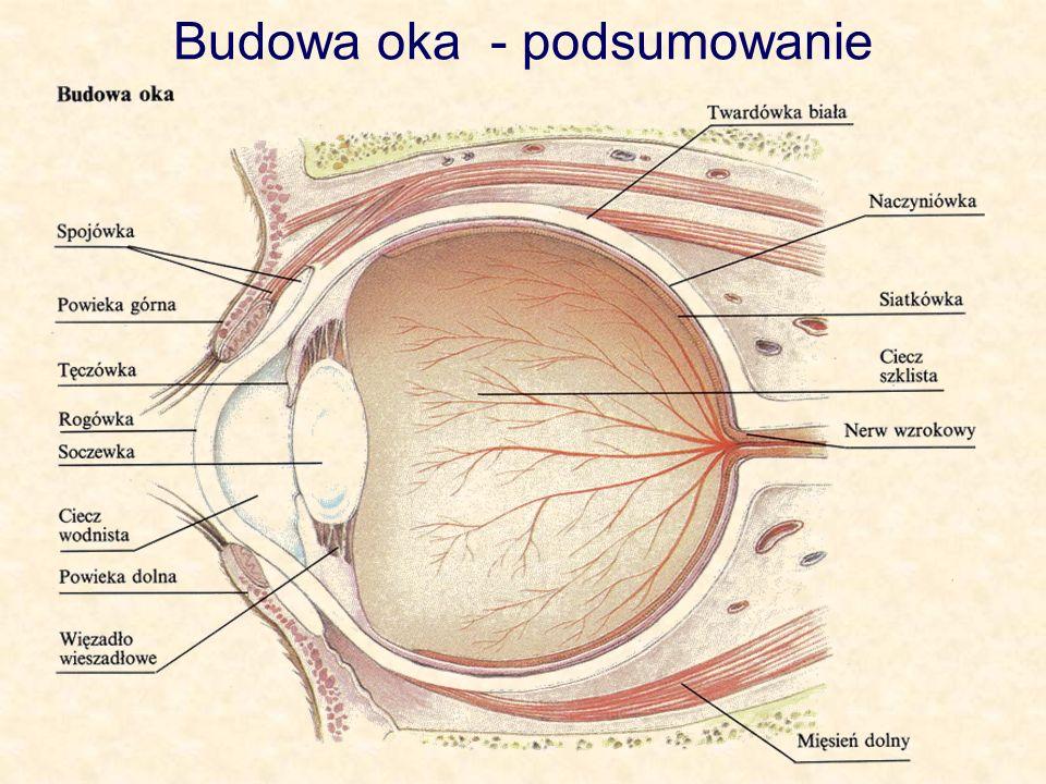 Budowa oka - podsumowanie