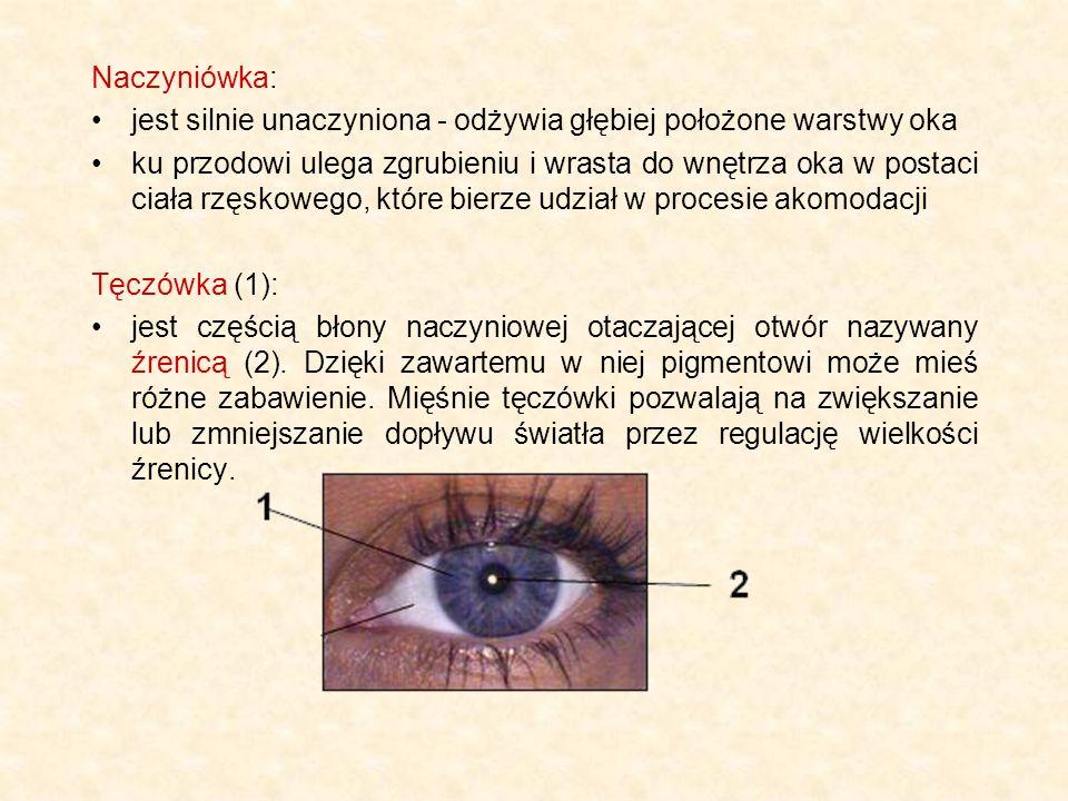Naczyniówka: jest silnie unaczyniona - odżywia głębiej położone warstwy oka.