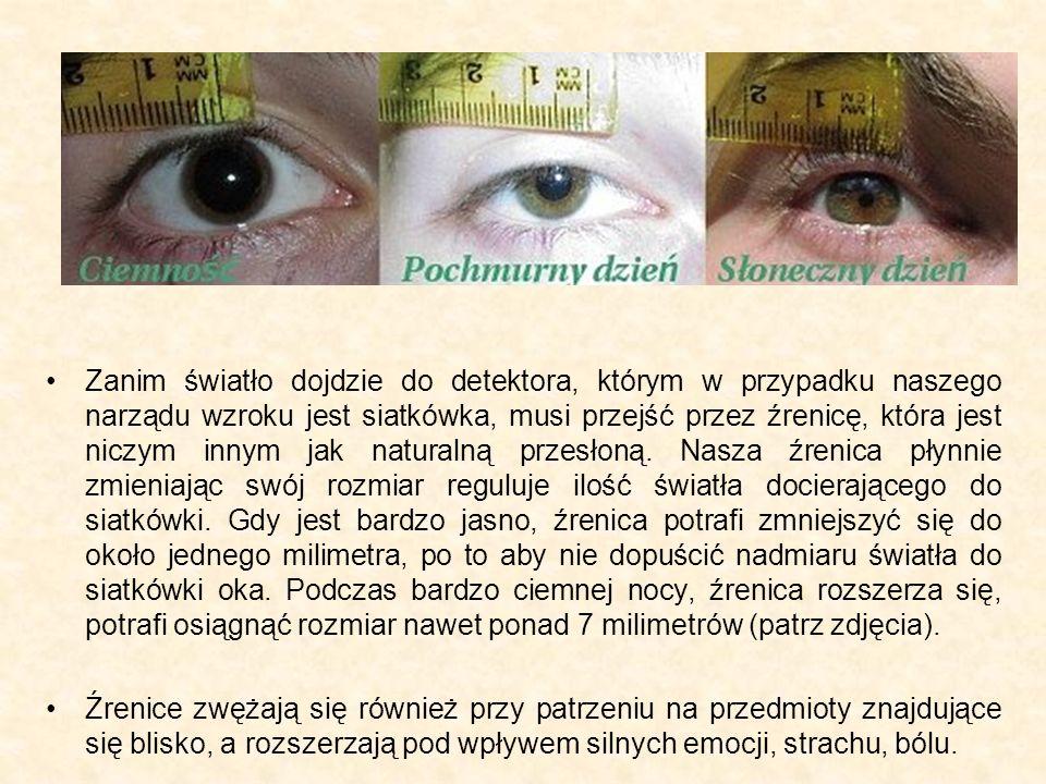 Zanim światło dojdzie do detektora, którym w przypadku naszego narządu wzroku jest siatkówka, musi przejść przez źrenicę, która jest niczym innym jak naturalną przesłoną. Nasza źrenica płynnie zmieniając swój rozmiar reguluje ilość światła docierającego do siatkówki. Gdy jest bardzo jasno, źrenica potrafi zmniejszyć się do około jednego milimetra, po to aby nie dopuścić nadmiaru światła do siatkówki oka. Podczas bardzo ciemnej nocy, źrenica rozszerza się, potrafi osiągnąć rozmiar nawet ponad 7 milimetrów (patrz zdjęcia).