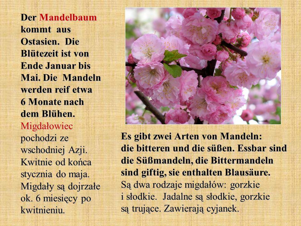 Der Mandelbaum kommt aus Ostasien