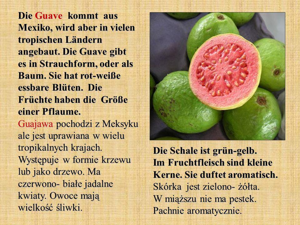 Die Guave kommt aus Mexiko, wird aber in vielen tropischen Ländern angebaut. Die Guave gibt es in Strauchform, oder als Baum. Sie hat rot-weiße essbare Blüten. Die Früchte haben die Größe einer Pflaume. Guajawa pochodzi z Meksyku ale jest uprawiana w wielu tropikalnych krajach. Występuje w formie krzewu lub jako drzewo. Ma czerwono- białe jadalne kwiaty. Owoce mają wielkość śliwki.