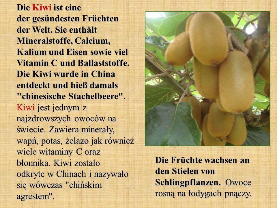 Die Kiwi ist eine der gesündesten Früchten der Welt