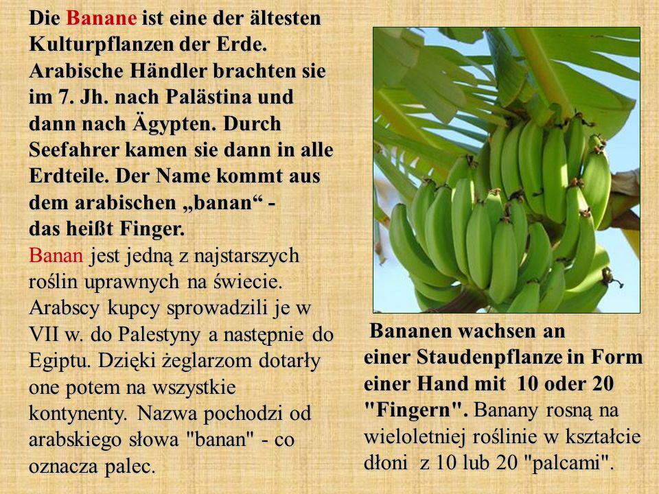 Die Banane ist eine der ältesten Kulturpflanzen der Erde