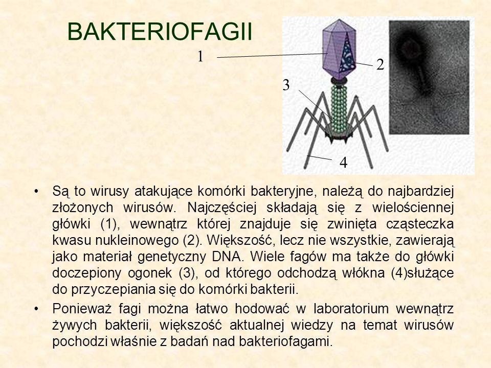 BAKTERIOFAGII 1. 2. 3. 4.