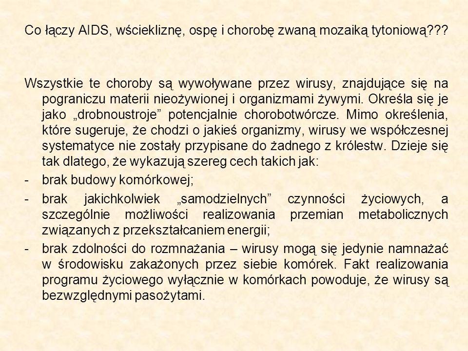 Co łączy AIDS, wściekliznę, ospę i chorobę zwaną mozaiką tytoniową