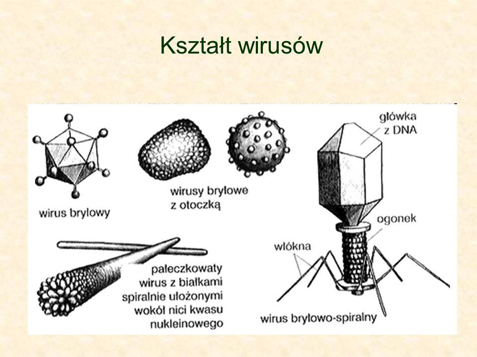 Kształt wirusów