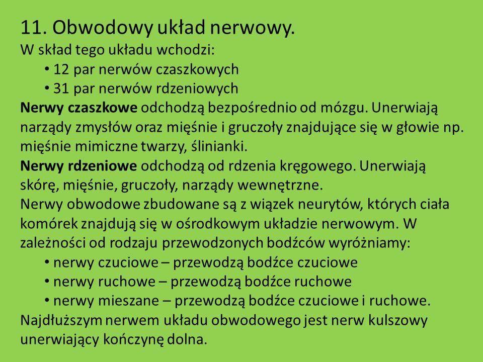 11. Obwodowy układ nerwowy.