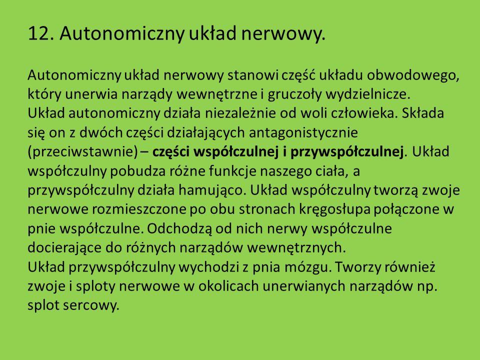 12. Autonomiczny układ nerwowy.