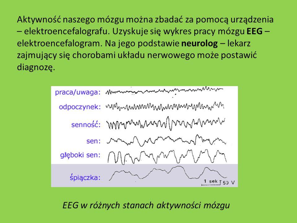 EEG w różnych stanach aktywności mózgu