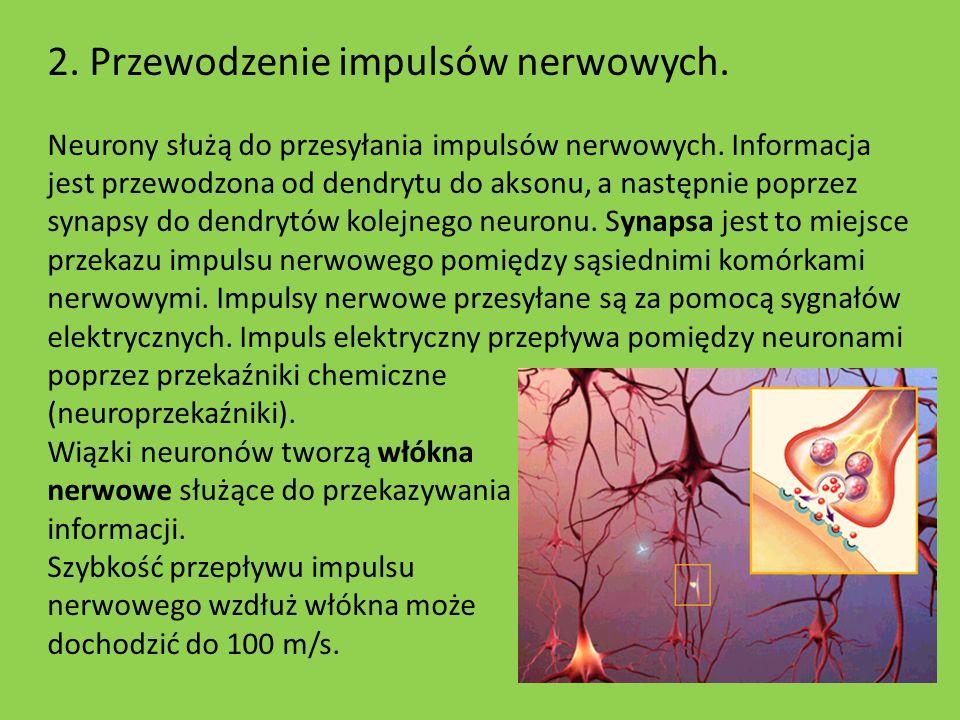2. Przewodzenie impulsów nerwowych.