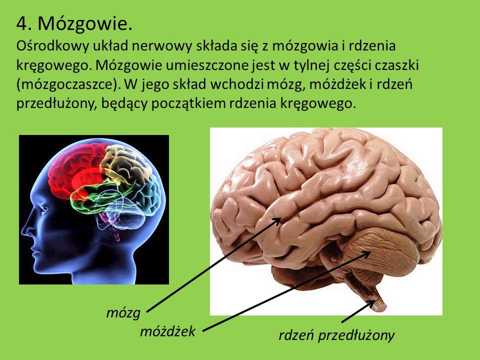 4. Mózgowie.