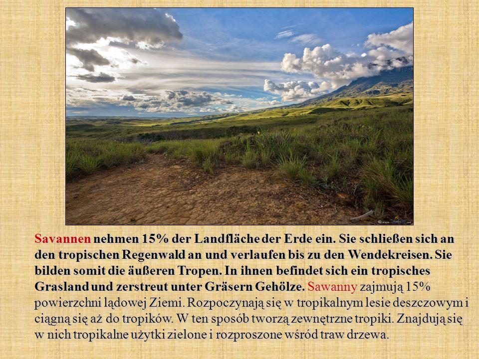 Savannen nehmen 15% der Landfläche der Erde ein