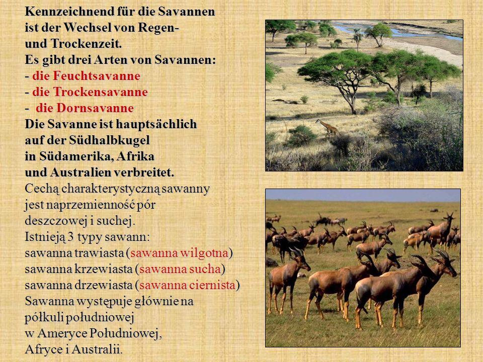 Kennzeichnend für die Savannen ist der Wechsel von Regen- und Trockenzeit.