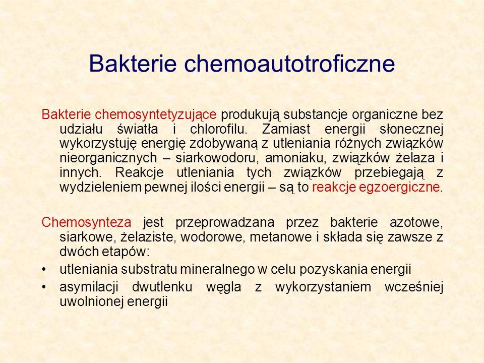 Bakterie chemoautotroficzne