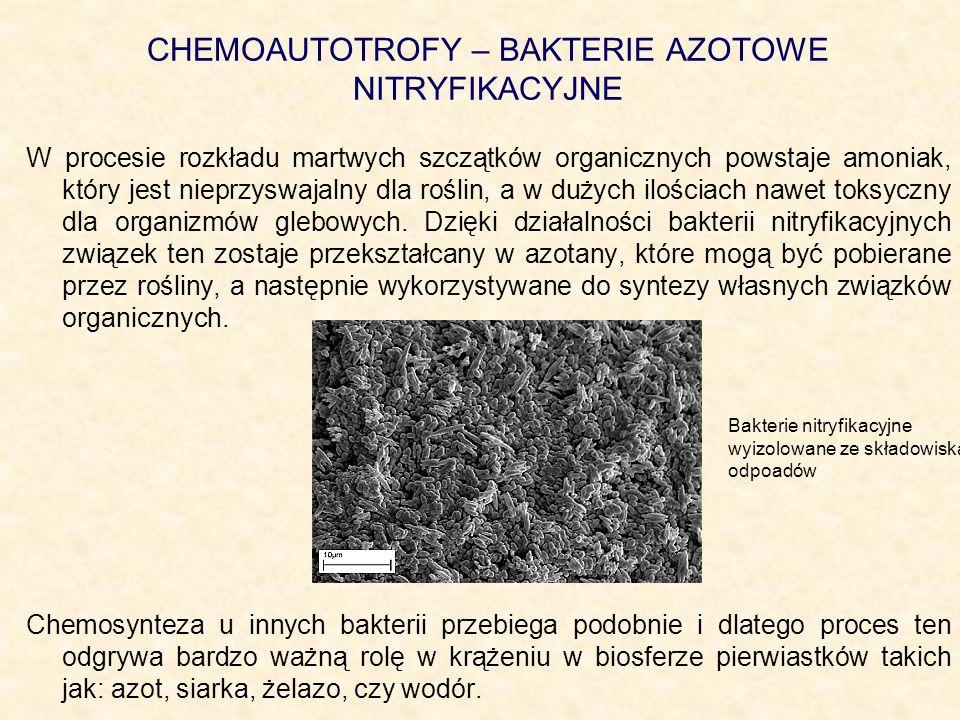 CHEMOAUTOTROFY – BAKTERIE AZOTOWE NITRYFIKACYJNE