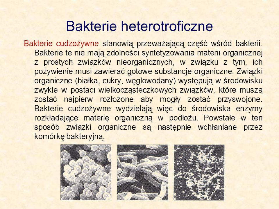 Bakterie heterotroficzne