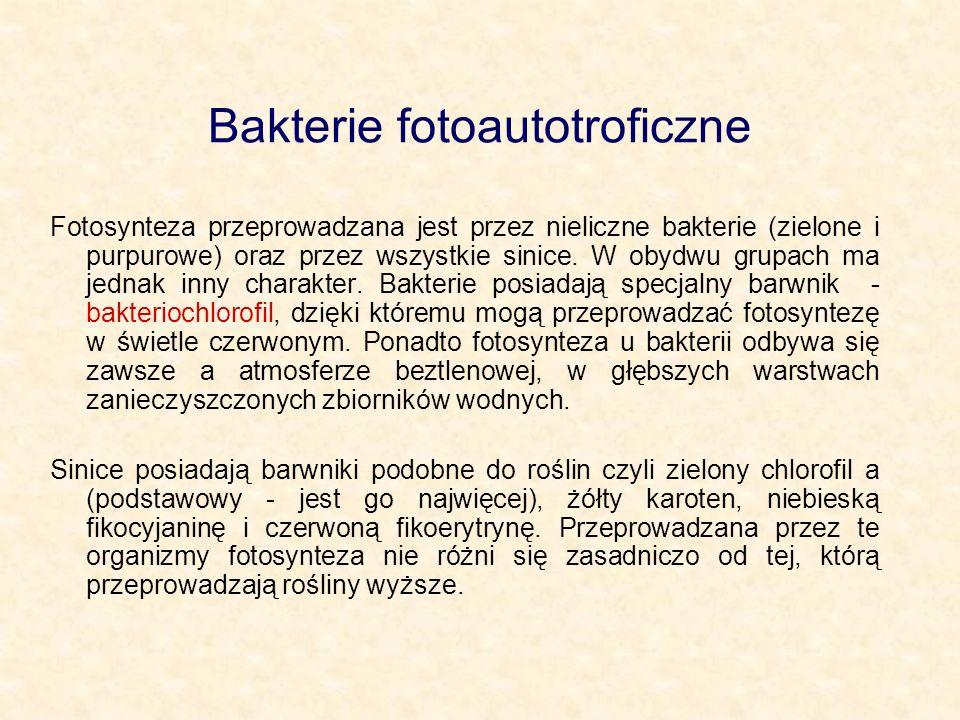 Bakterie fotoautotroficzne