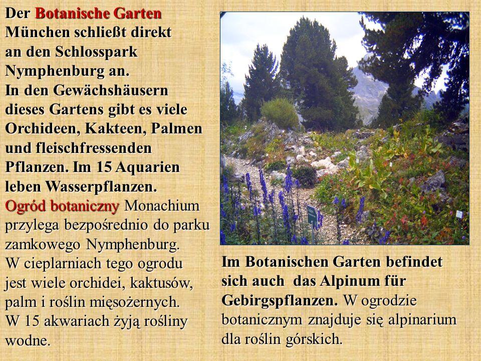 Der Botanische Garten München schließt direkt an den Schlosspark Nymphenburg an. In den Gewächshäusern dieses Gartens gibt es viele Orchideen, Kakteen, Palmen und fleischfressenden Pflanzen. Im 15 Aquarien leben Wasserpflanzen. Ogród botaniczny Monachium przylega bezpośrednio do parku zamkowego Nymphenburg. W cieplarniach tego ogrodu jest wiele orchidei, kaktusów, palm i roślin mięsożernych. W 15 akwariach żyją rośliny wodne.