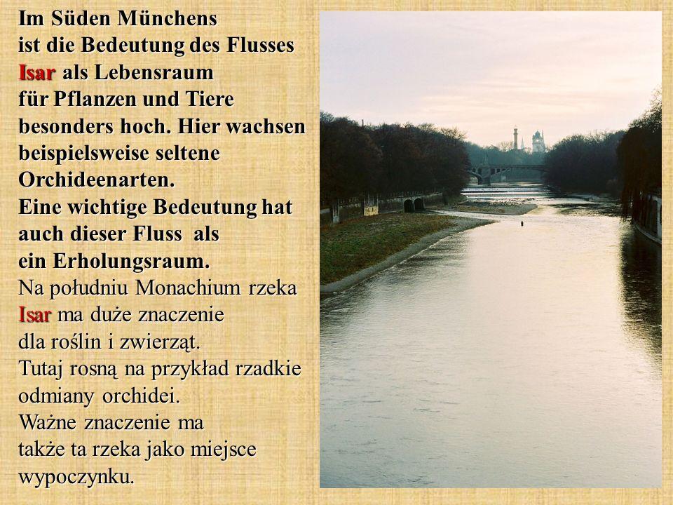 Im Süden Münchens ist die Bedeutung des Flusses Isar als Lebensraum für Pflanzen und Tiere besonders hoch.