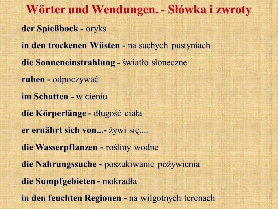 Wörter und Wendungen. - Słówka i zwroty