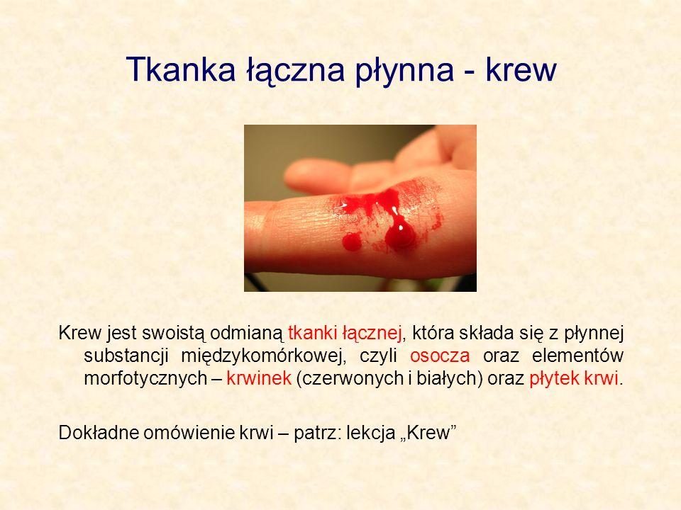 Tkanka łączna płynna - krew