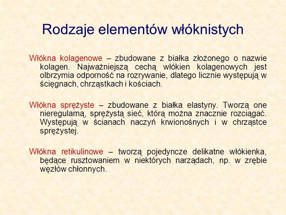 Rodzaje elementów włóknistych