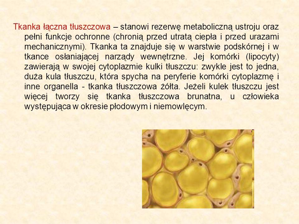 Tkanka łączna tłuszczowa – stanowi rezerwę metaboliczną ustroju oraz pełni funkcje ochronne (chronią przed utratą ciepła i przed urazami mechanicznymi).