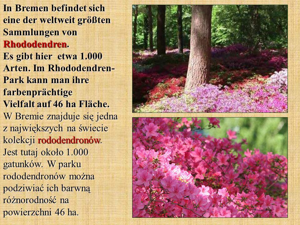 In Bremen befindet sich eine der weltweit größten Sammlungen von Rhododendren.