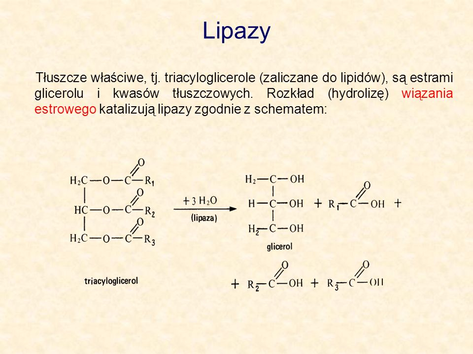 Lipazy