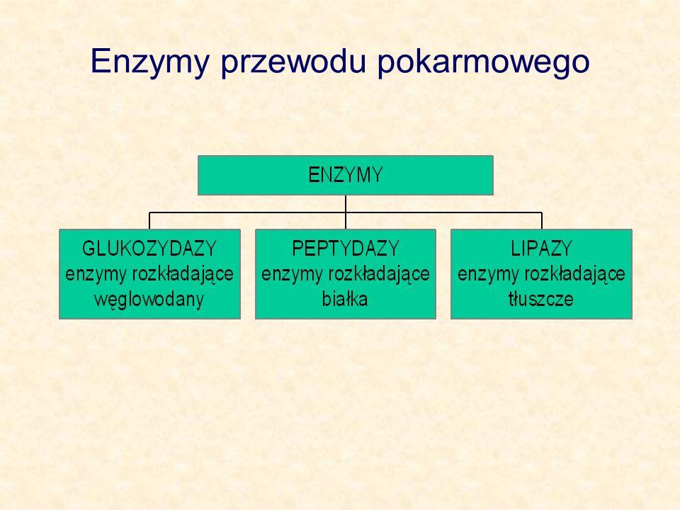 Enzymy przewodu pokarmowego