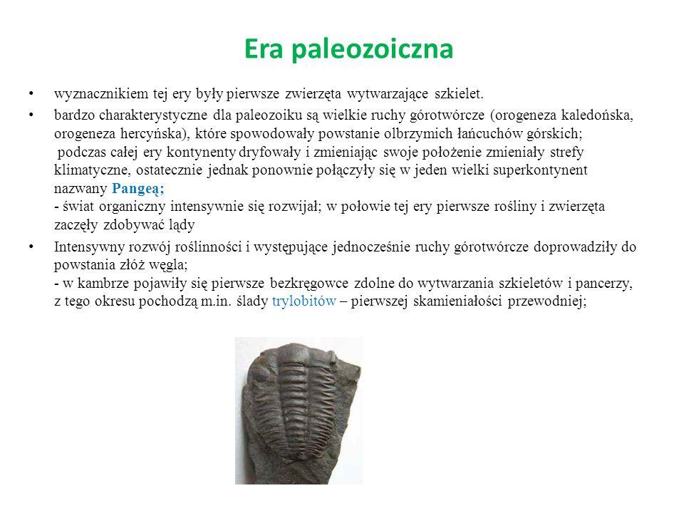 Era paleozoiczna wyznacznikiem tej ery były pierwsze zwierzęta wytwarzające szkielet.