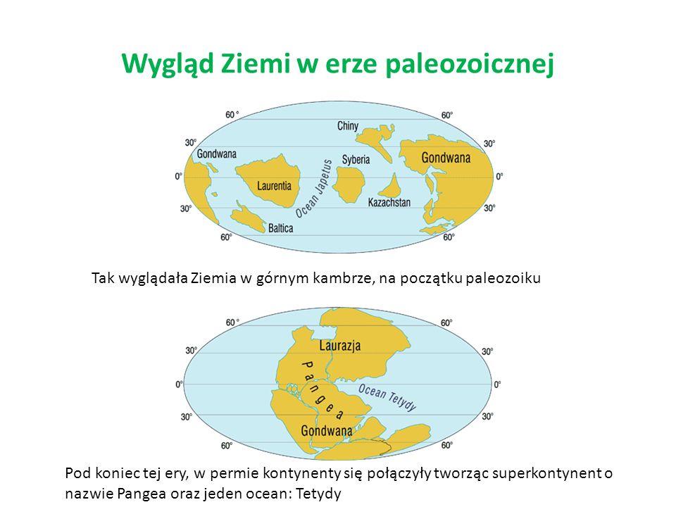 Wygląd Ziemi w erze paleozoicznej