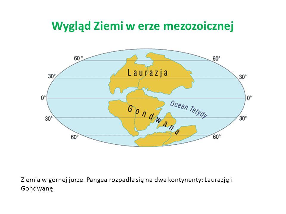 Wygląd Ziemi w erze mezozoicznej