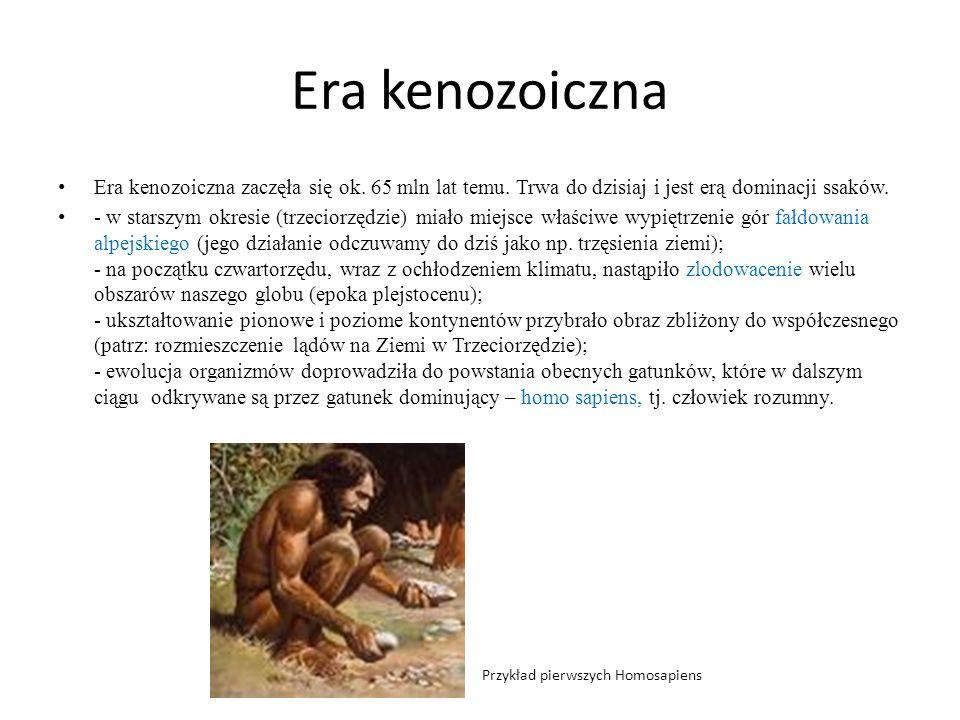 Era kenozoicznaEra kenozoiczna zaczęła się ok. 65 mln lat temu. Trwa do dzisiaj i jest erą dominacji ssaków.