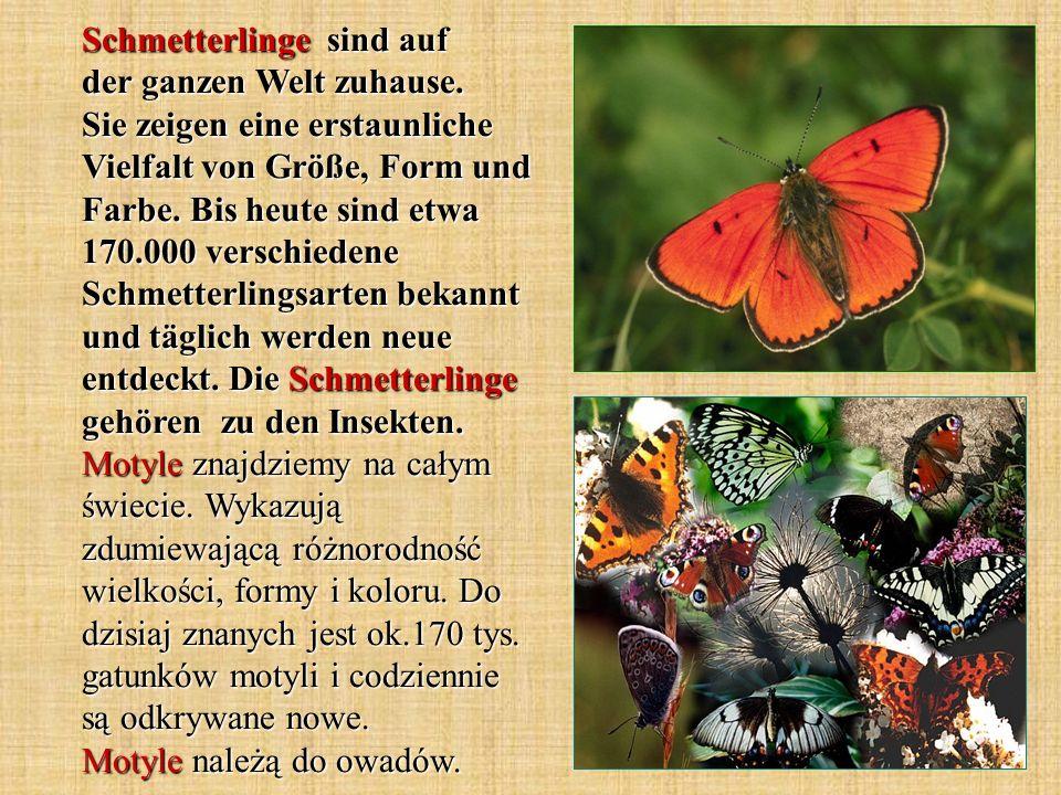 Schmetterlinge sind auf der ganzen Welt zuhause